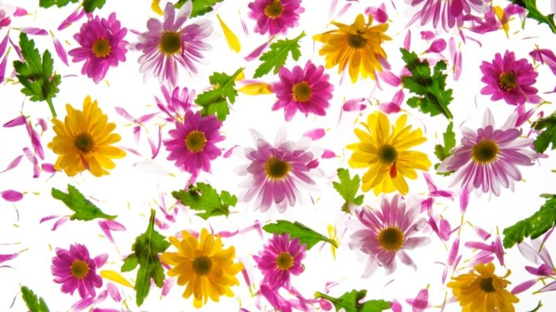 mascherina-uso-civile-con-filtro-fiori